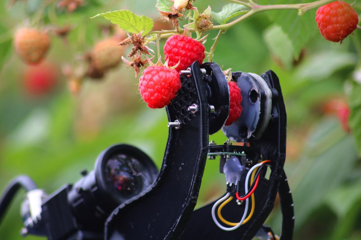 Data from the initial field trial of the raspberry-harvesting robot system will inform further design, ahead of commercialization of the technology in 2020
