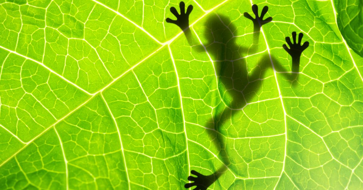 DNA study rediscovers frog species lost to science for 50 years