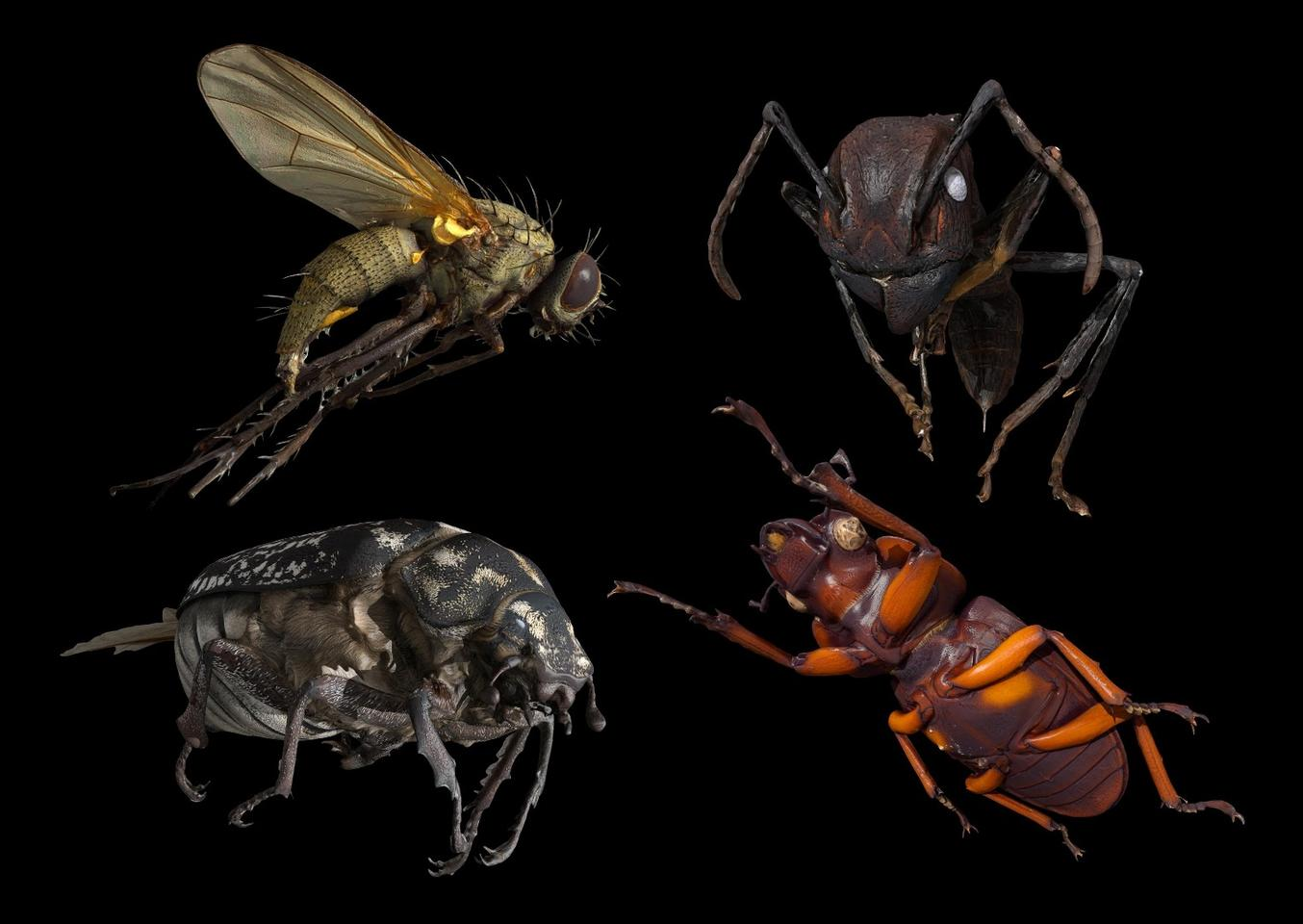 Some of the 3D insect models created by the DISC3D