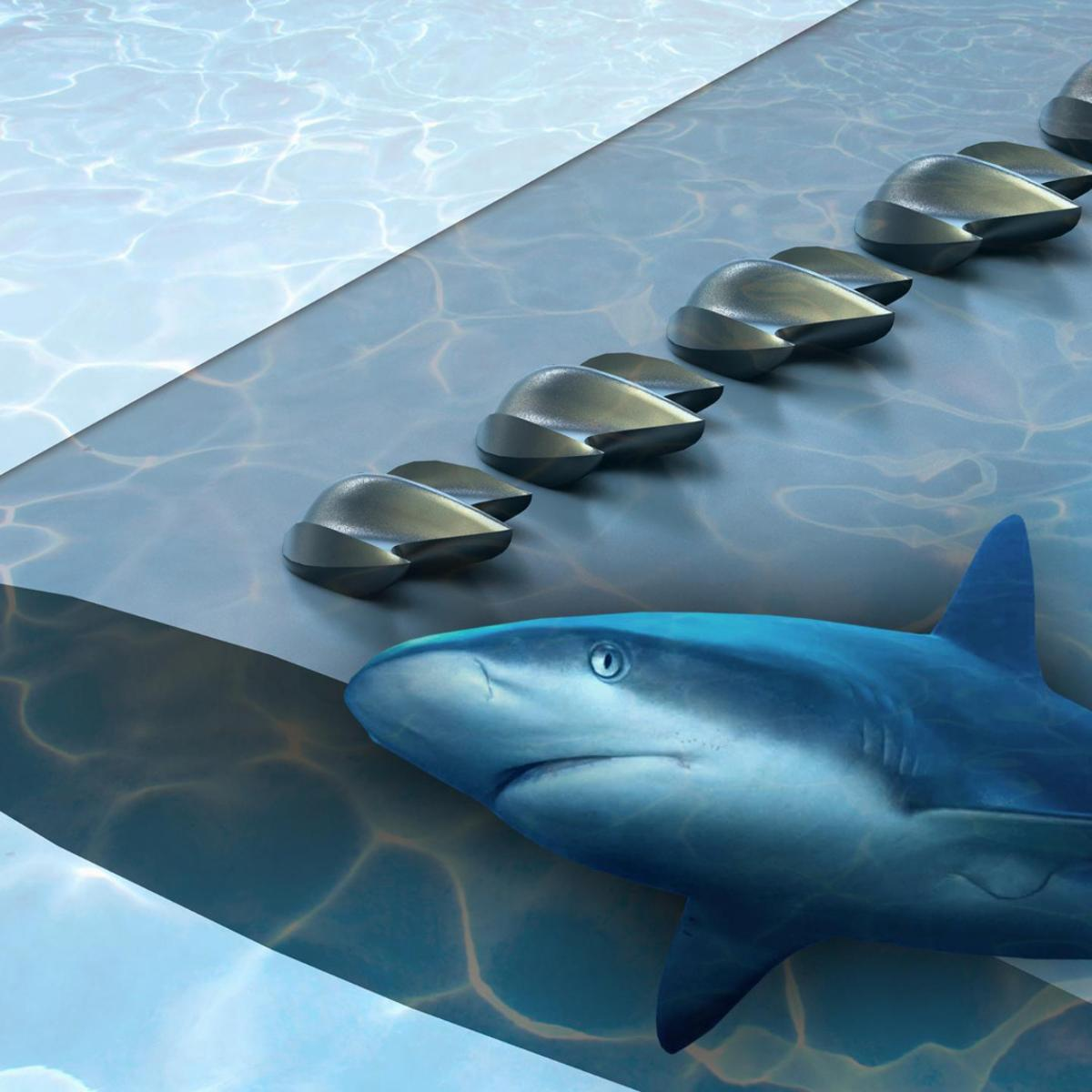 In a new study, researchers turned to shark scales in anattemptto improve the aerodynamic performance of planes, drones and wind turbines