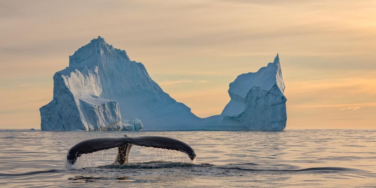 """Finalist, Travel. """"Two Whales"""". A humpback whale surfaces in front of a large iceberg that resembles the profile of a sperm whale off the coast of East Greenland, near Tasiilaq"""