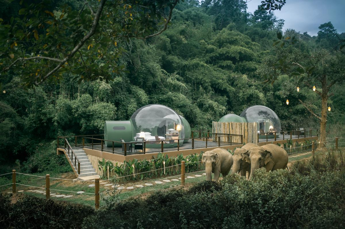 If you'd like to stay in one of the Jungle Bubbles, they are an optional extra for visitors at the Anantara Golden Triangle Elephant Camp & Resort