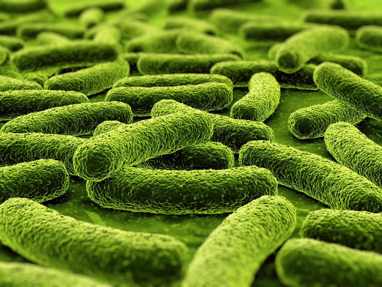 Scientists have engineered bacteria to produce a chemical calledtryptamine