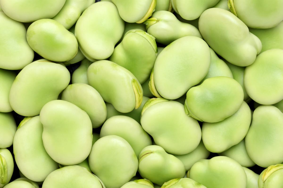 Fava beans – also known as broad beans or faba beans