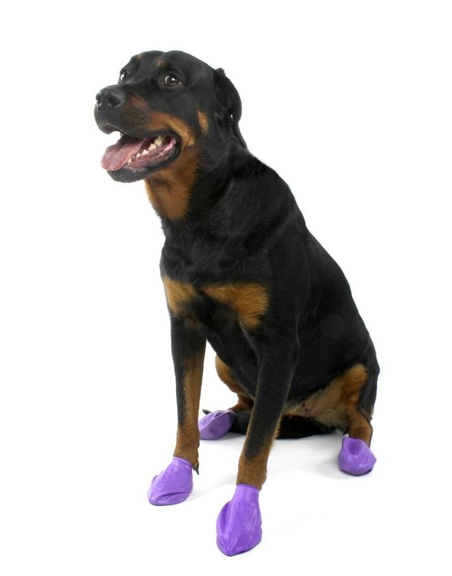 Pawz boots are like Wellingtons for dogs