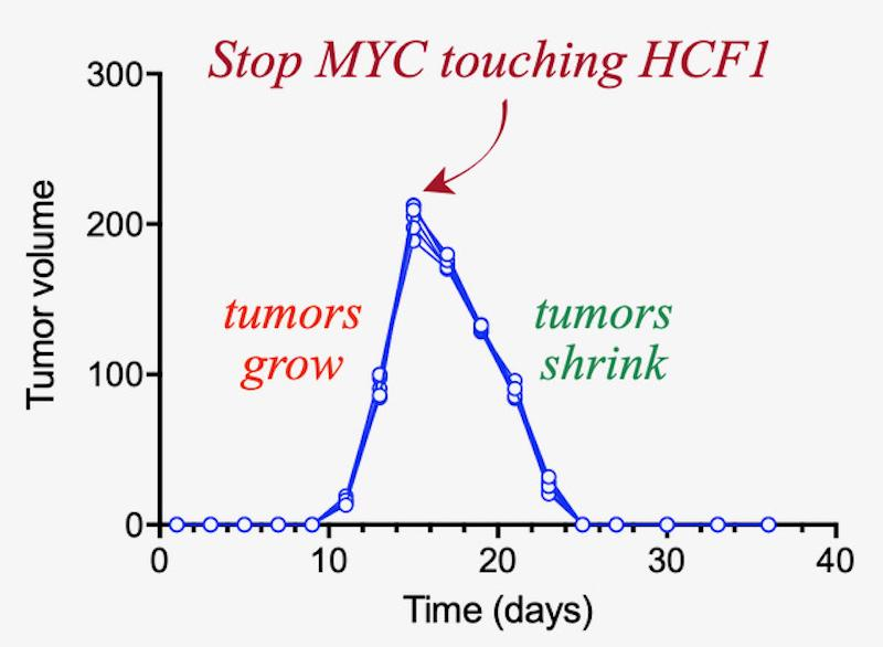 A chart illustrating the rate of cancer growth before treatment and shrinking after