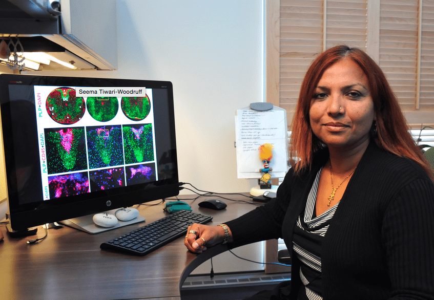Seema Tiwari-Woodruff, associate professor of biomedical sciences at the UC Riverside School of Medicine (Photo: I. Pittalwala, UC Riverside)