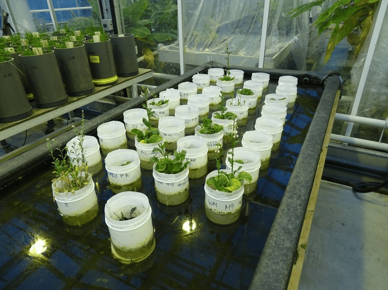 Worms were found to improve crops grown in simulated Martian soil