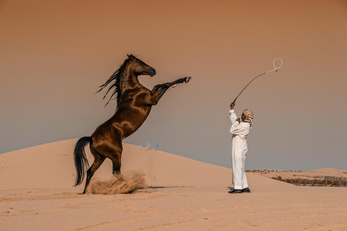 "Winner, Saudi Arabia. ""Horse Motion"". A horse breeder plays a horse in one of the stables of Abu Dhabi, United Arab Emirates"
