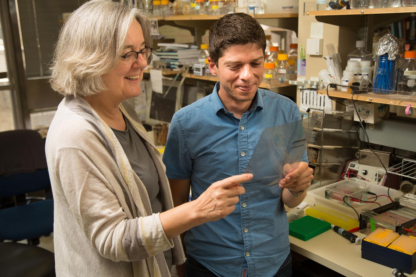 Victoria Lundblad and Timothy Tucey who have discovered an on/off switch for telomerase (Photo: Salk Institute for Biological Studies)