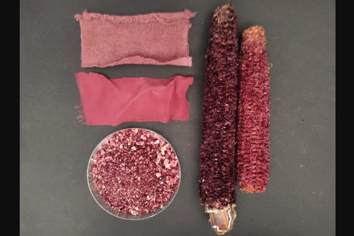 Scientists extracted pigment from purple corn cobs (right) for supplements and dyeing fabrics (top left), and tested the remaining grounds (bottom left) for use in kitty litter