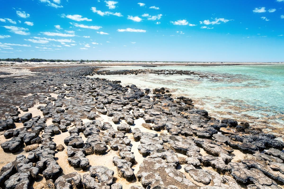 Fossils such as stromatolites (pictured) can't tell us the complete story of life on Earth, so a new study has turned to genetics to trace the commonancestor of all living creatures