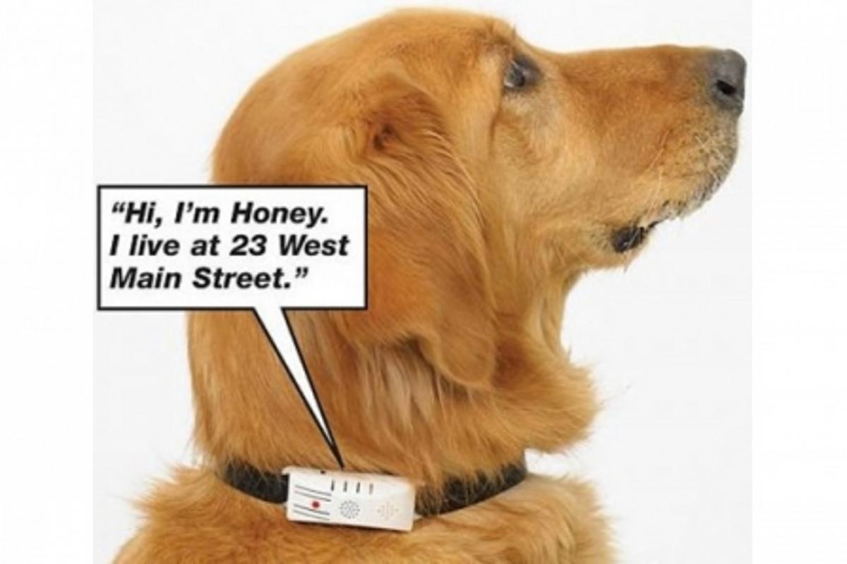 Could this talking dog collar also help keep Rover safe from nasty fleas?