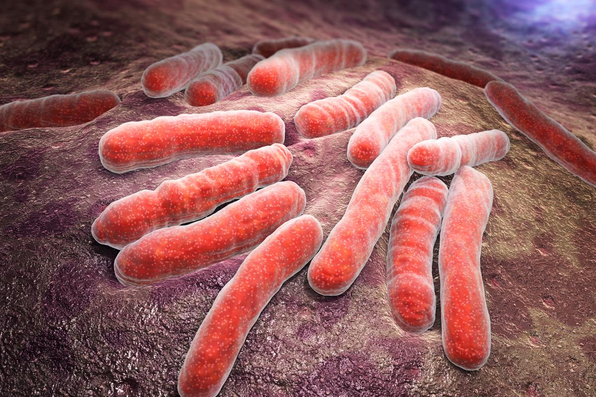 An impression of Mycobacterium tuberculosis, the bacteria that causes tuberculosis