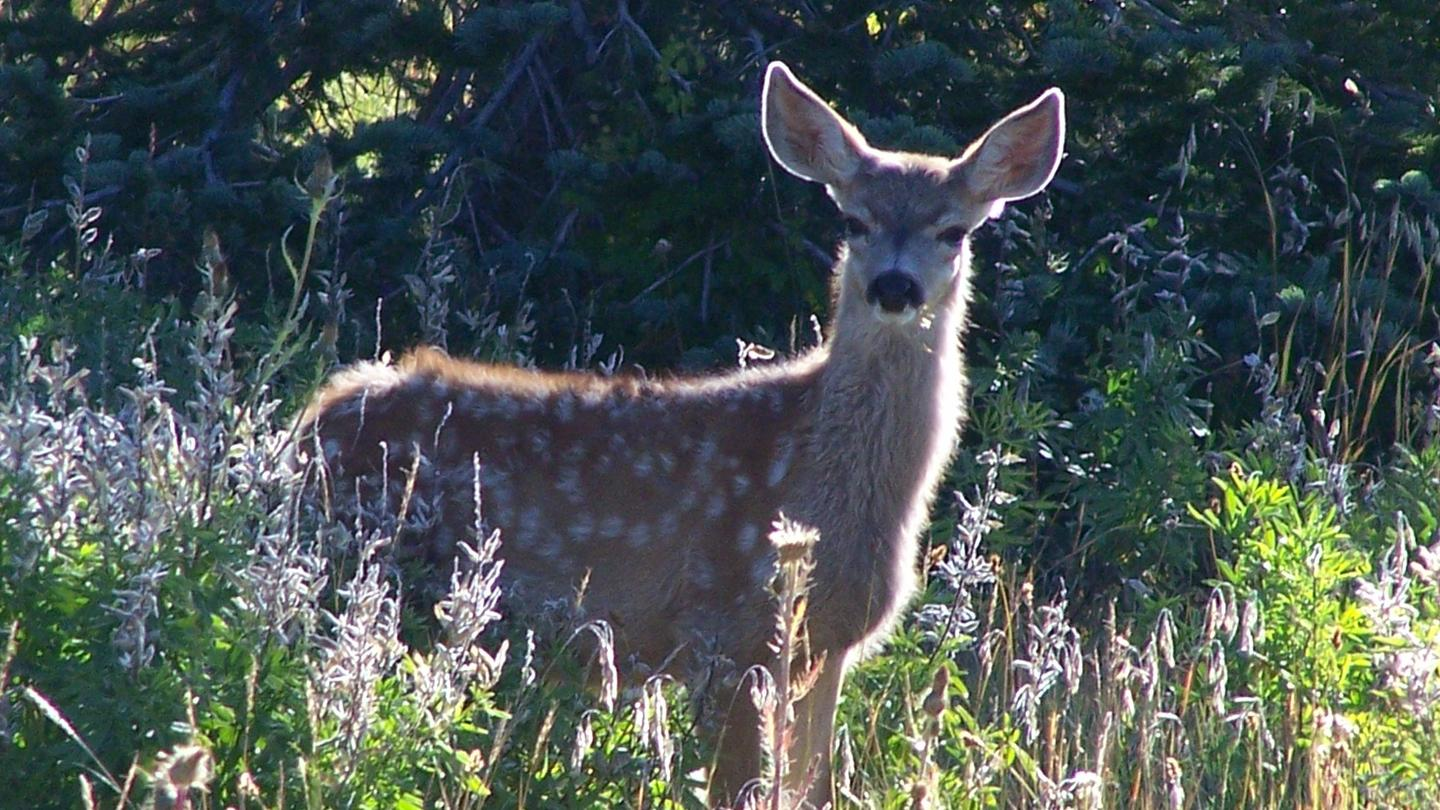 Researchers were able to track when deer are likely to start giving birth by looking at the health of surrounding vegetation
