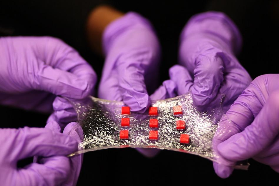 A sheet of hydrogel is bonded to a matrix of polymer islands (red) that can encapsulate electronic components such as semiconductor chips, LED lights, and temperature sensors