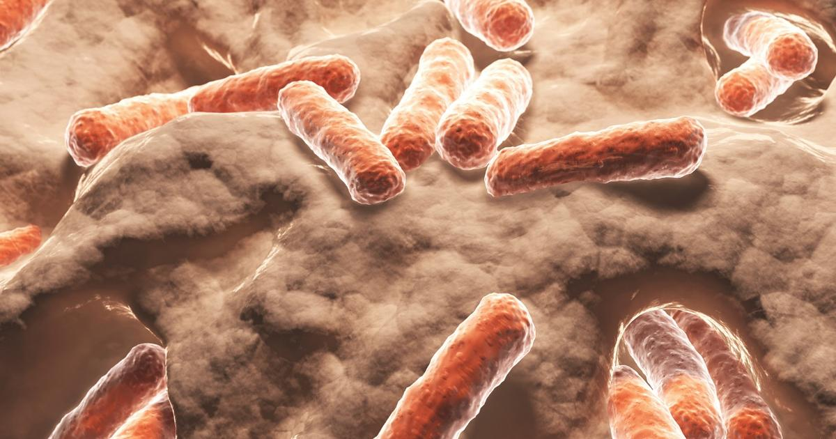 New research uncovers compelling link between gut bacteria, obesity and the immune system