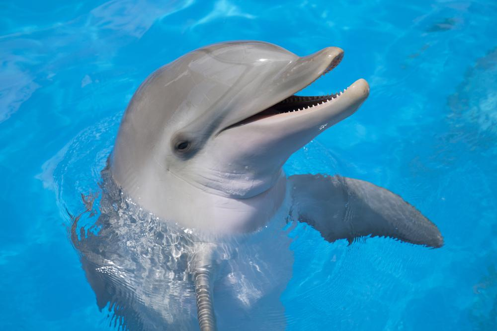 You can tell a lot about a dolphin by its breath (Photo: Shutterstock)