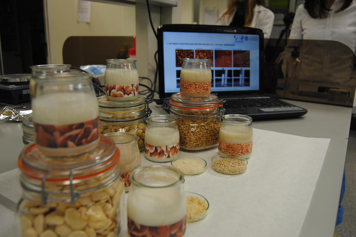 Researchers use probiotic bacteria from nuts to make new products