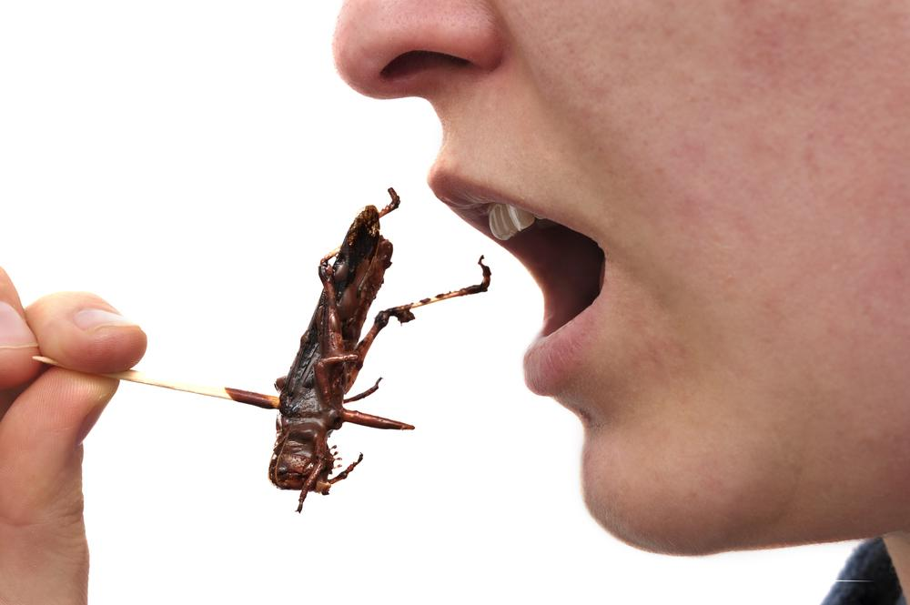 """The major question is, why would we not eat insects?"" (Photo: Shutterstock)"