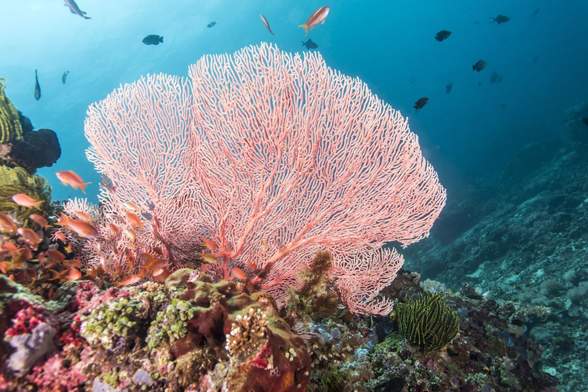 A synthetic material that mimic the structure of coral could help remove toxic heavy metals from the ocean (Credit: Shutterstock)