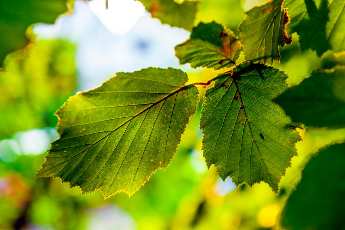 Researchers have developed a new design of artificial leaf that's able to pull carbon dioxide out of the air