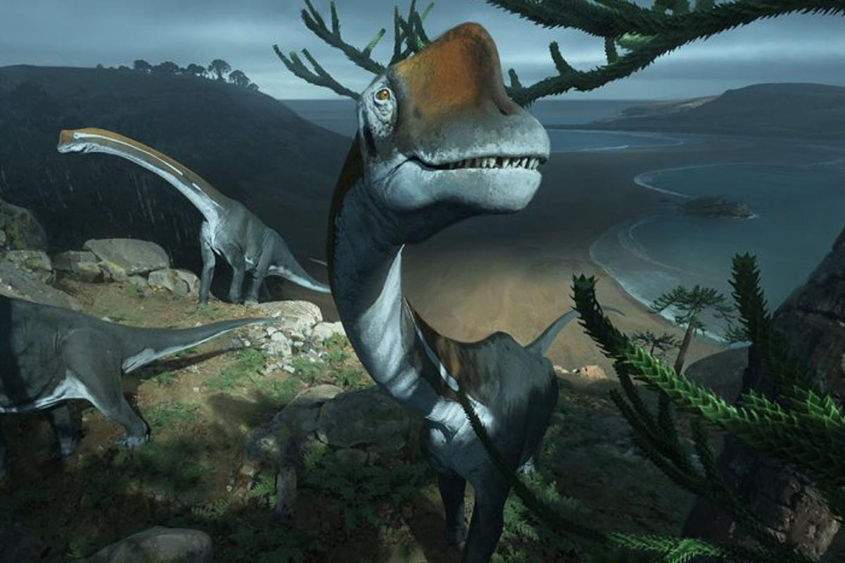 The scientists say the newly identified dinosaur,Vouivria,died at a young ageweighing around 15,000 kg (33,000 lb)
