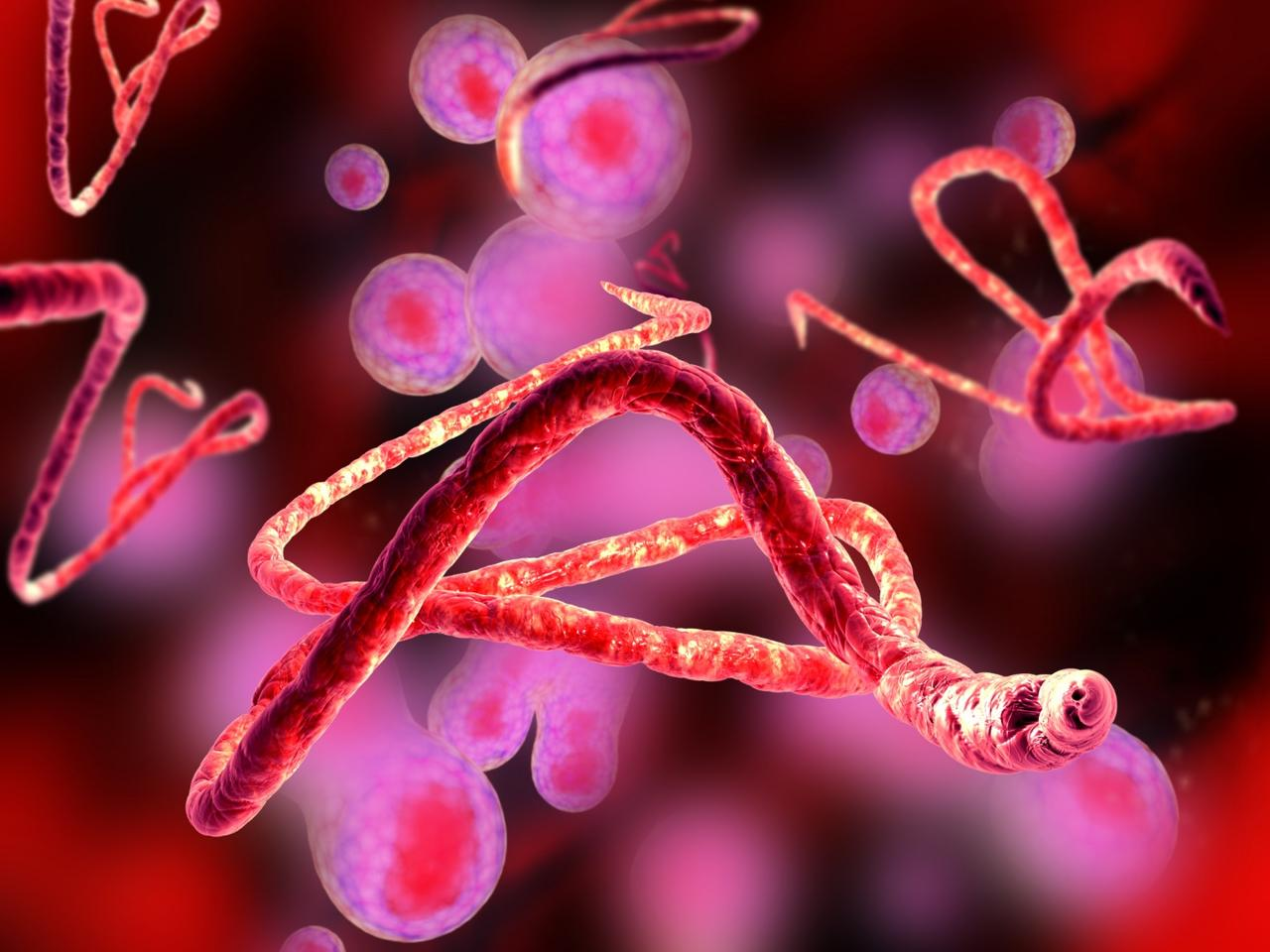 There are currently five known strains of the Ebola virus