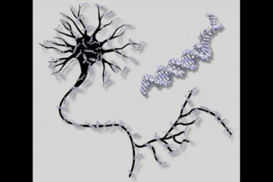 Scientists at Caltech have created the world's first DNA-based artificial neural network