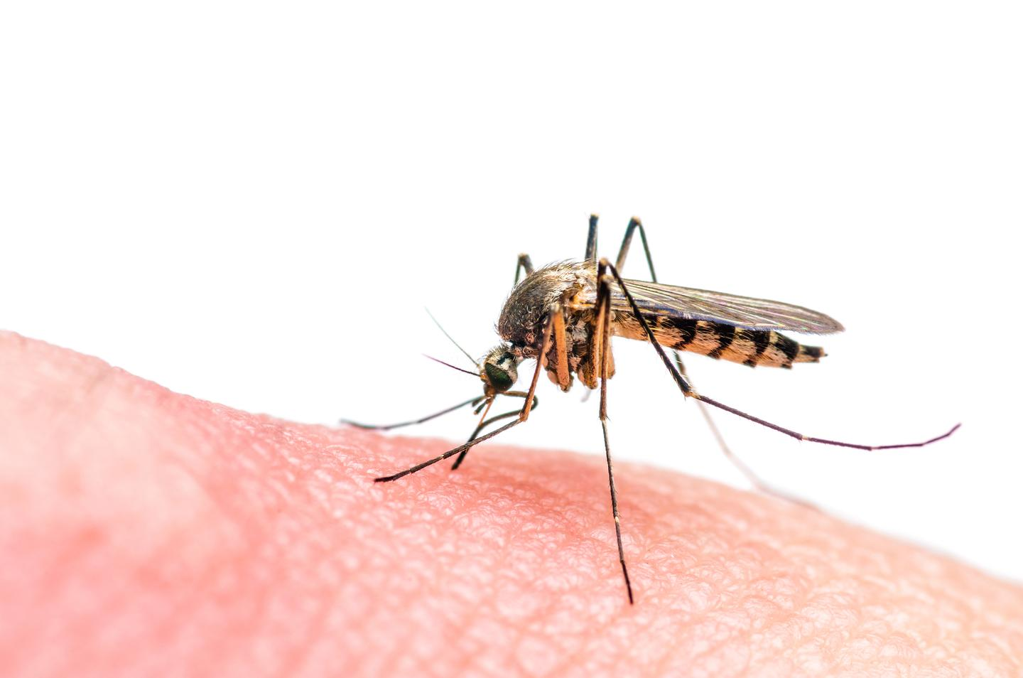 A new research project is looking to enable safer testing of genetic modifications to mosquito populations