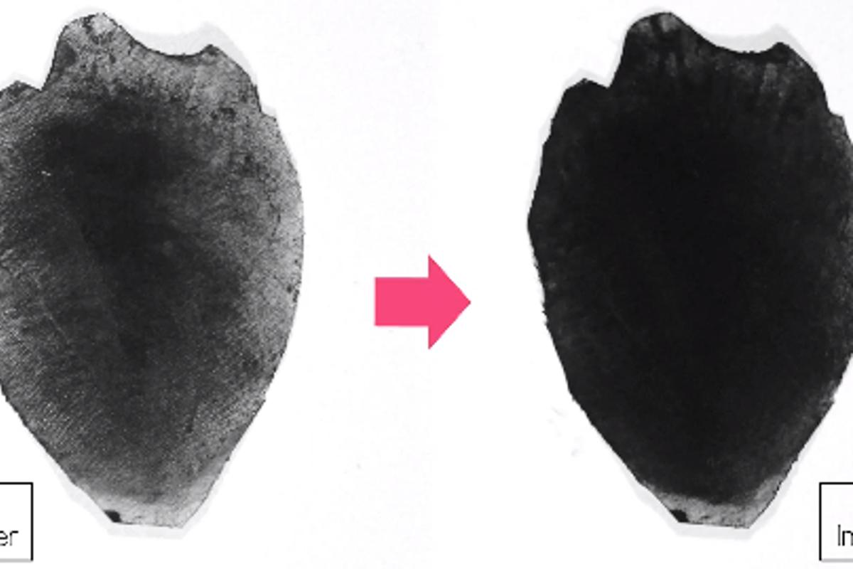 A flower petal treated with WetForce-enabled sunscreen, before and after exposure to water
