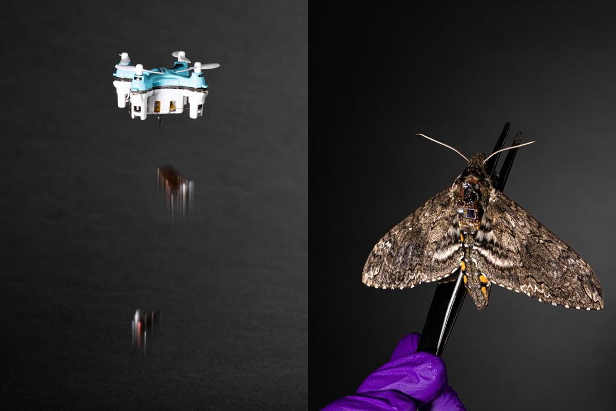 A new sensor system could be attached to small drones or insects, and dropped into environments to study for years at a time