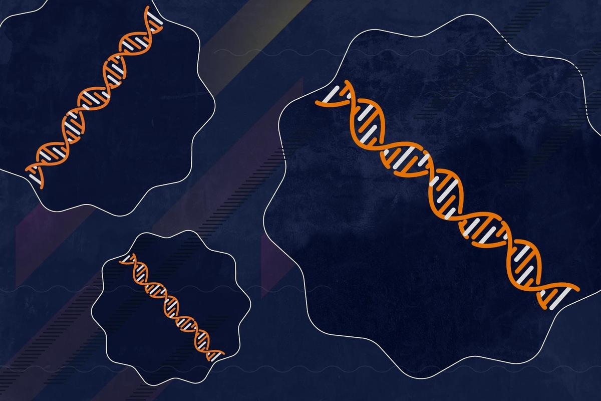 The location of our DNA inside a cell's nucleus can determine how effectively the cell functions