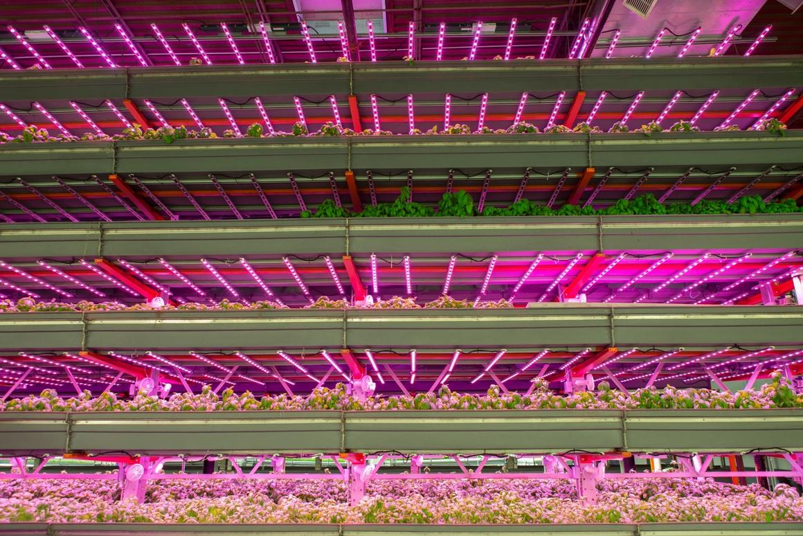 The Louisville farm will accommodate 10 rows of vertical grow beds
