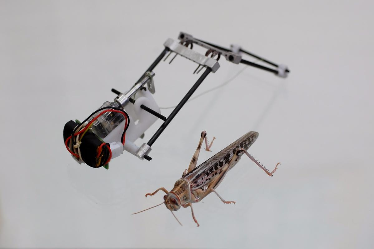 The TAUB robot, with its natural inspiration