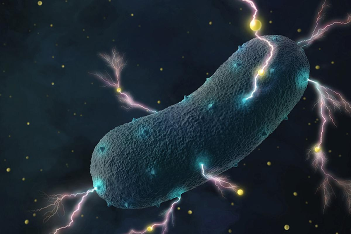 An artist's rendition of Listeria bacteria, which have been found to produce electricity