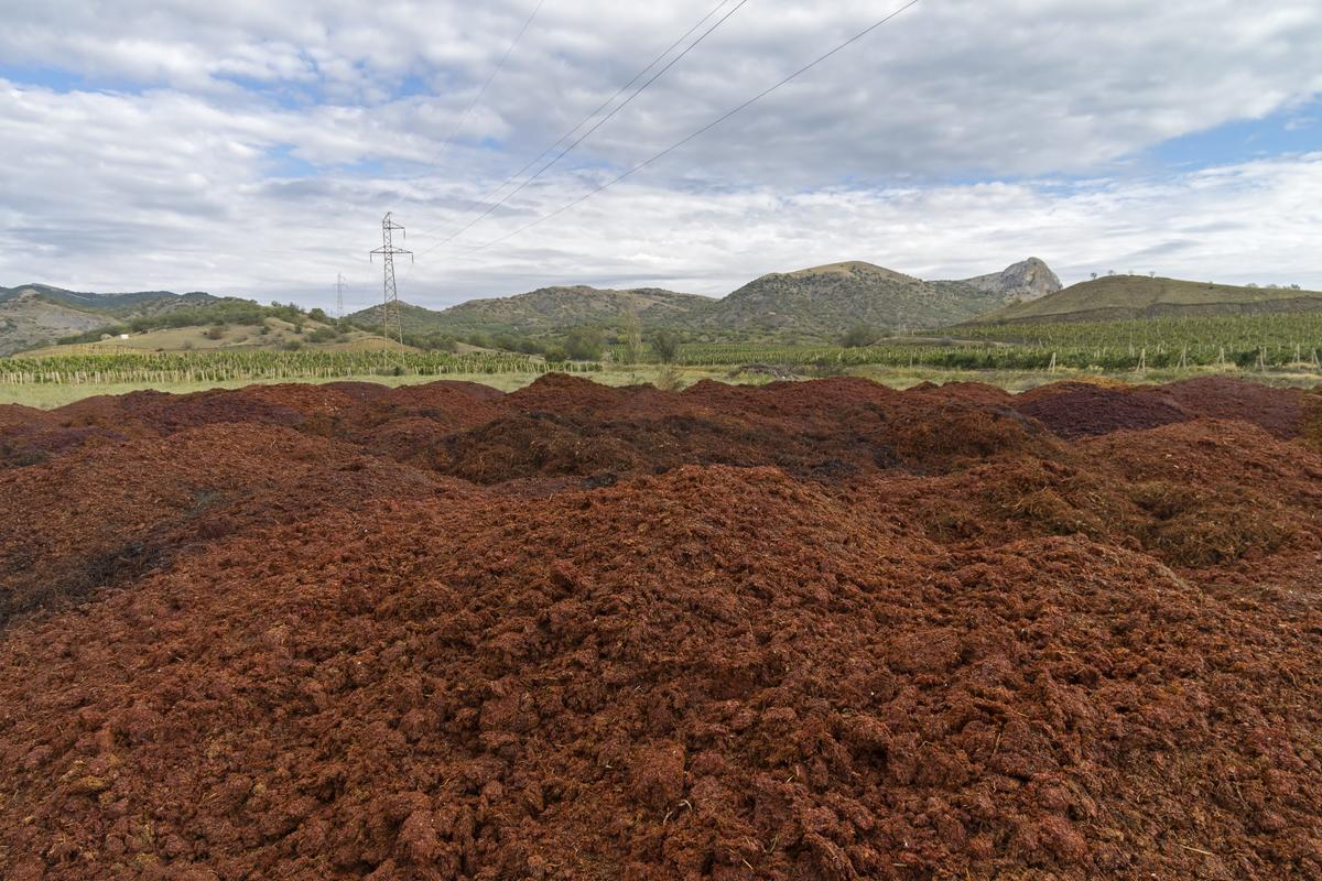 Mounds of grape marc could be made into litres of biofuel