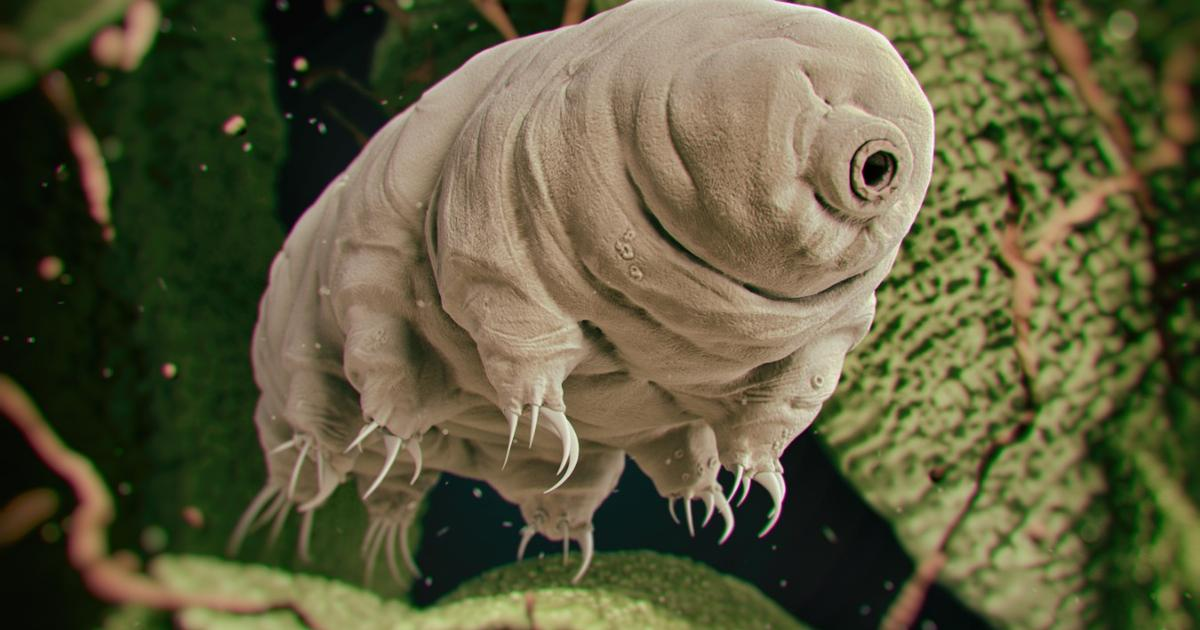 Indestructible tardigrades thought to have lived through crash-landing on the Moon