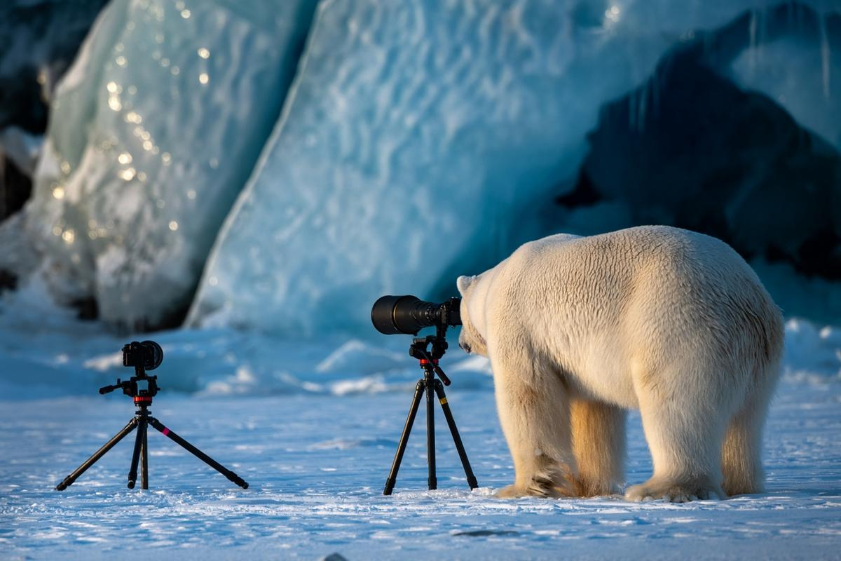 A big male Polar Bear in Svalbard. Awarded in the 2019 Siena International Photo Awards
