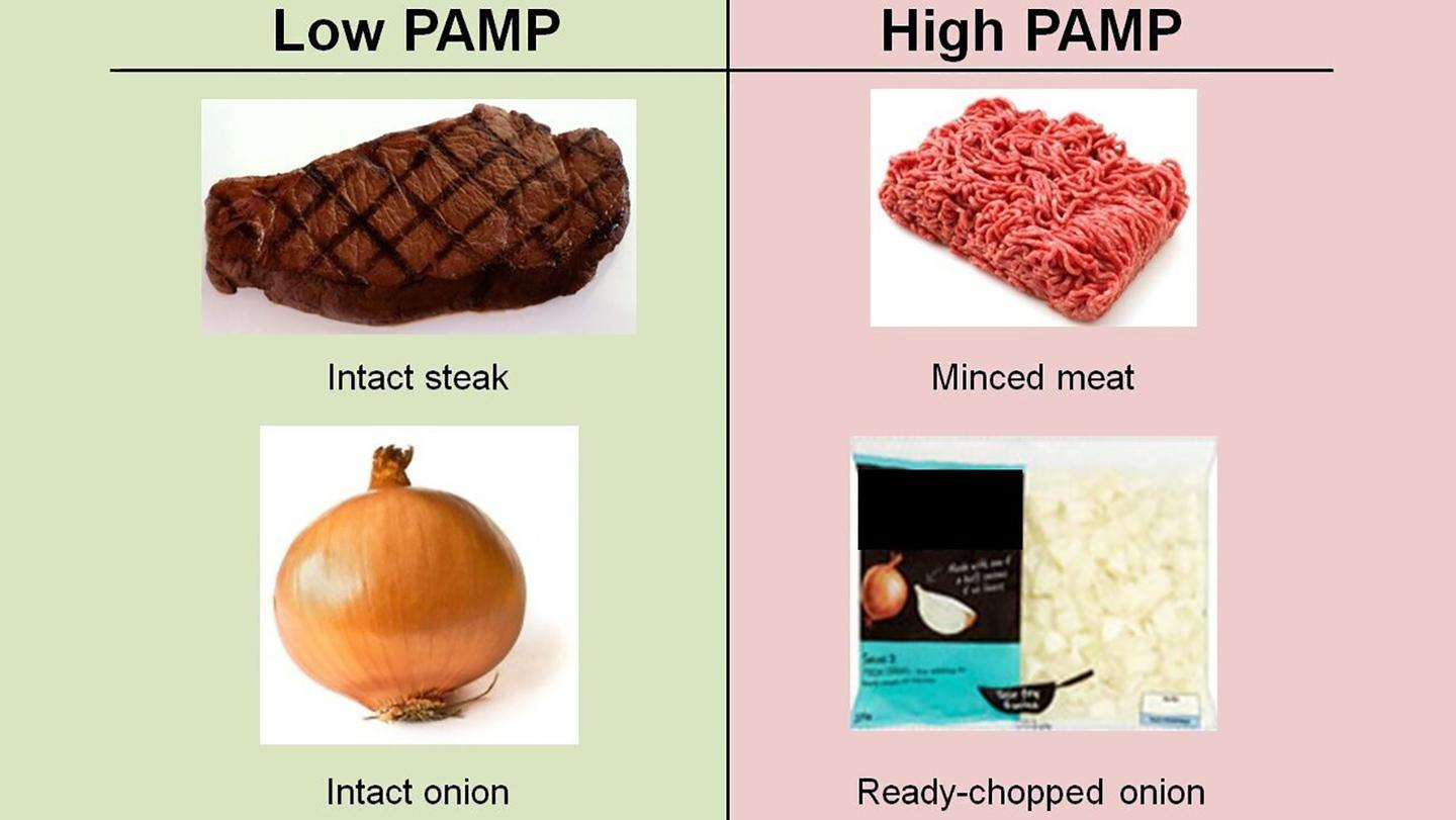The harmful PAMP molecules were found to be common in processed foods, but undetectable in fresh produce