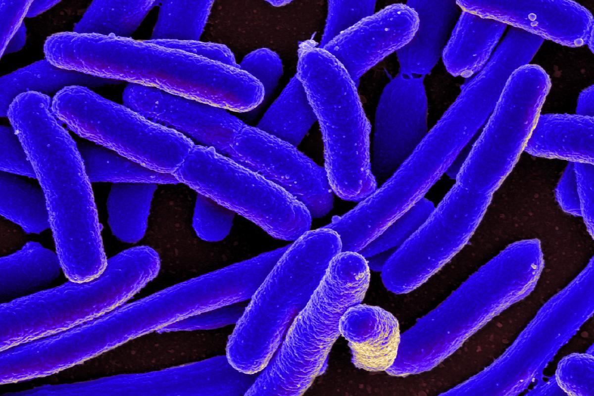 In a proof-of-concept study, scientists at the University of Granada have shown how an ancestral protein dating to as far back as four billion years can protect E. colifrom a bacteria-infecting virus