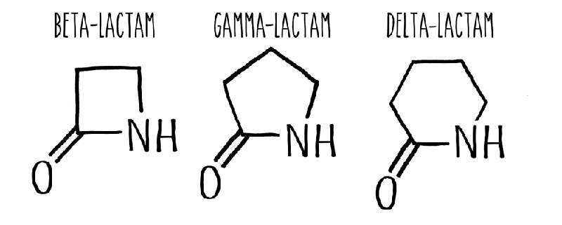 The molecular structure of the different lactams