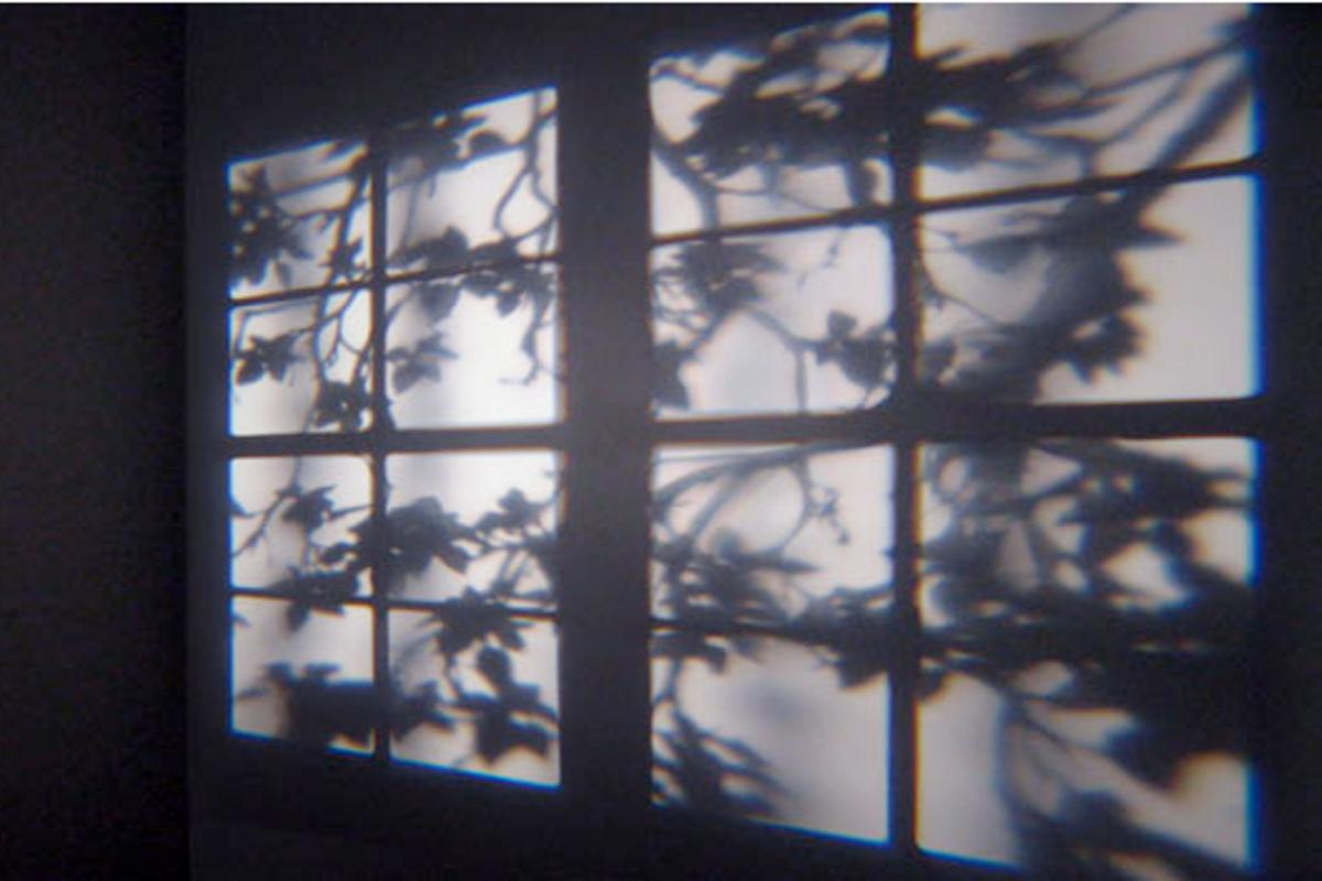 A window frame and stirring branches projected by Adam Frank's REVEAL