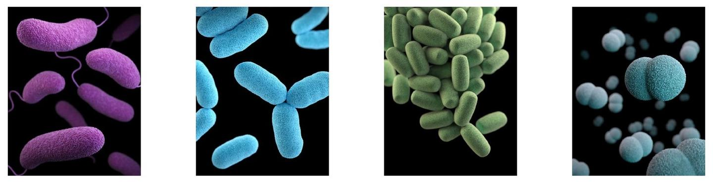 Some bacteria produce substances with antibiotic properties