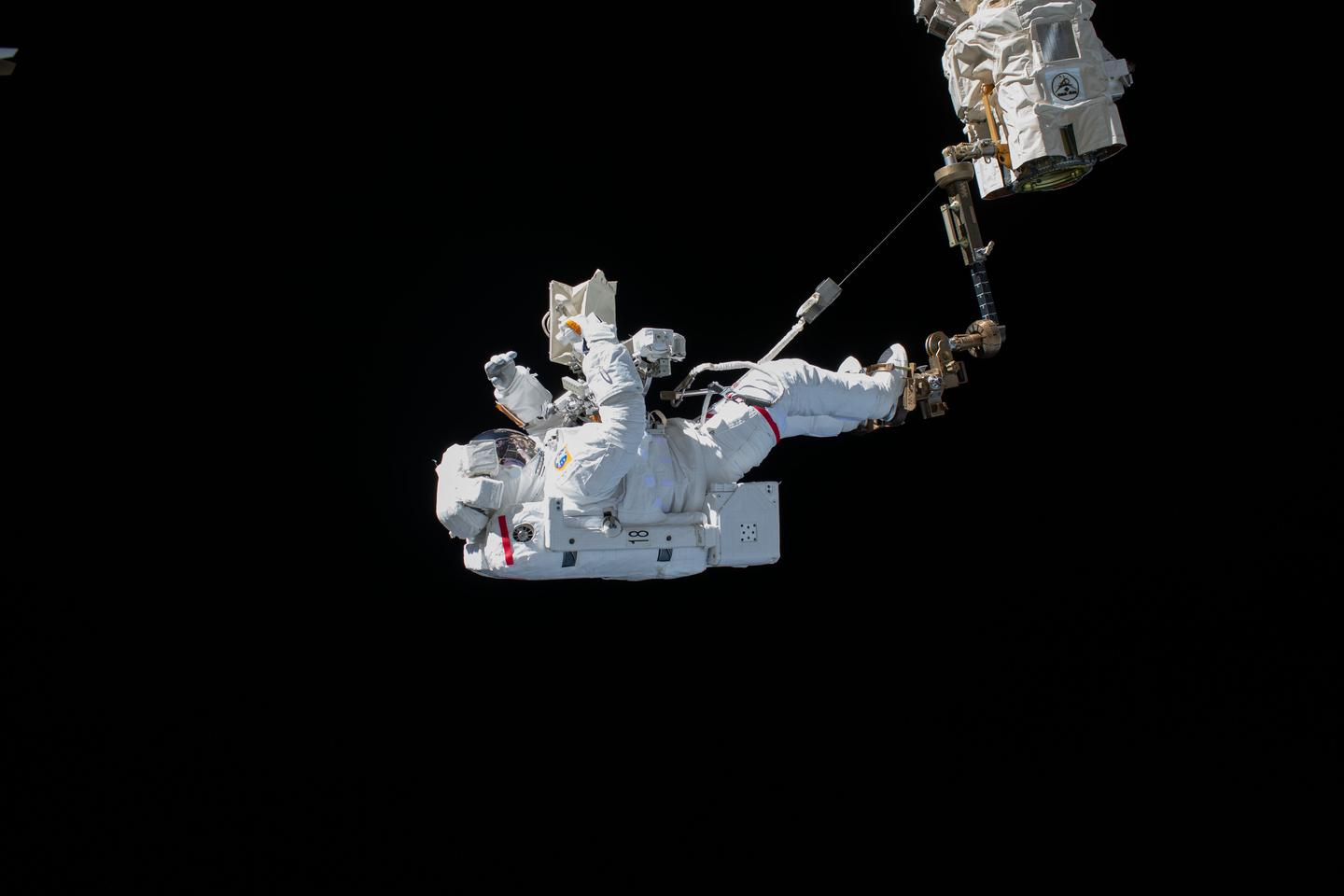 A new study has found that microgravity can affect the cells lining the walls of the intestines