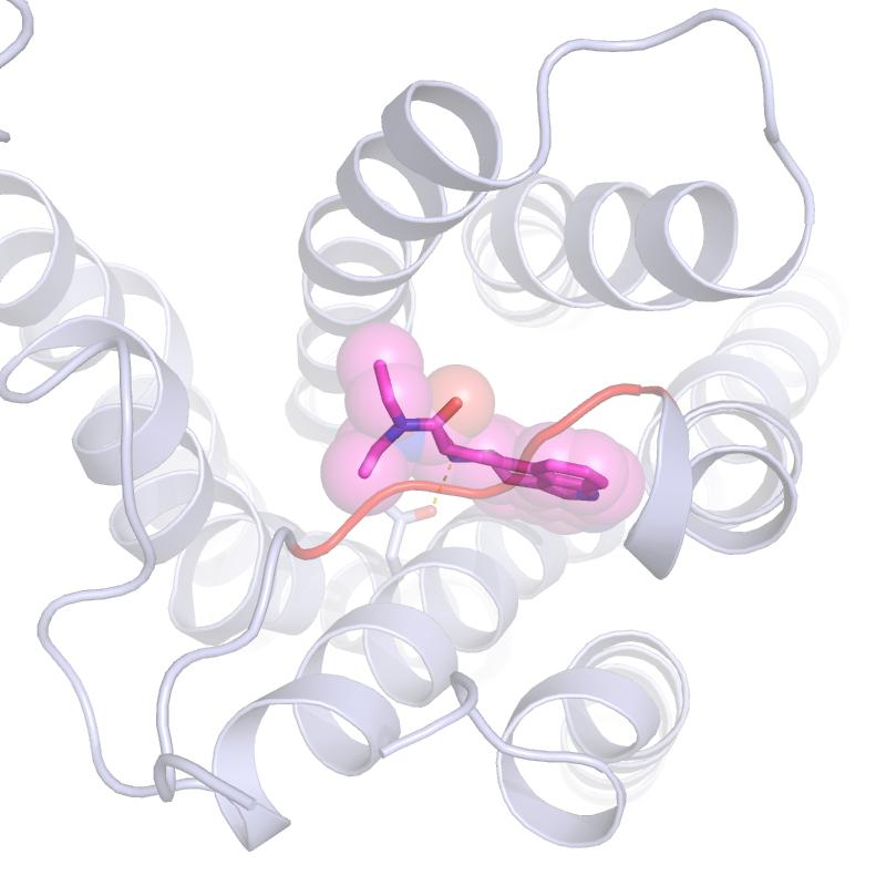 A molecule of LSD bound to a larger serotonin receptor – the 'lid' that keeps it bound so long is the orange bar running through the center