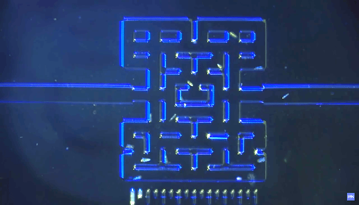 Researchers in Norway have recreated the iconic maze from Pac-Man on a microscopic scale, and filled it with microbes that will hunt each other