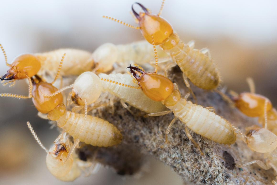 If the discovery can be leveraged for the purposes of pest control, it could be a game-changer