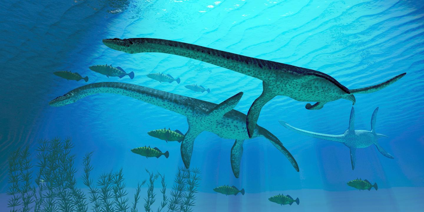 Whatever the Loch Ness monster is – if it even exists at all – it's probably not a plesiosaur