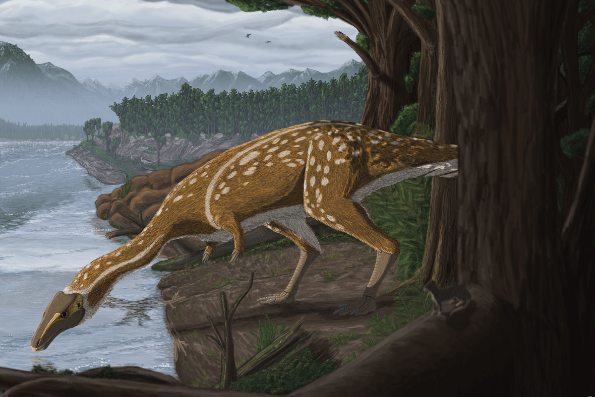 An artist's impression of the new elaphrosaur, discovered in Victoria, Australia
